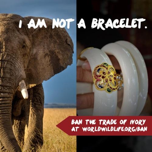 WWF I am not a trinket