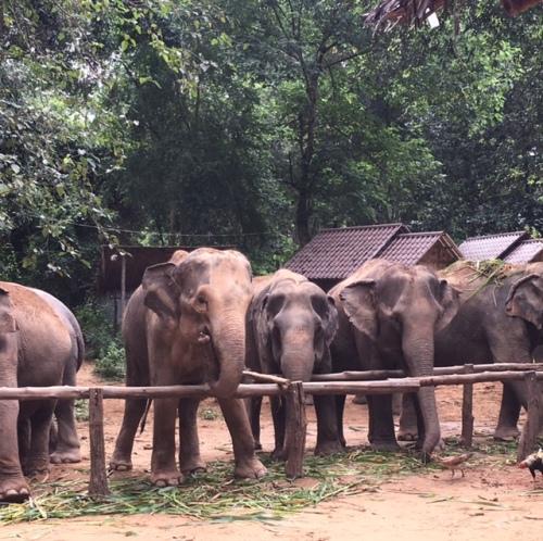 Elephant Haven.JPG