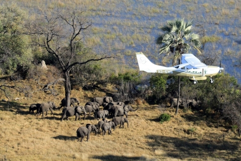 EWB-Botswana-10-flying-1-large.jpg